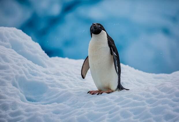 «Холодильник» Земли. Невероятные факты о загадочной и суровой Антарктиде