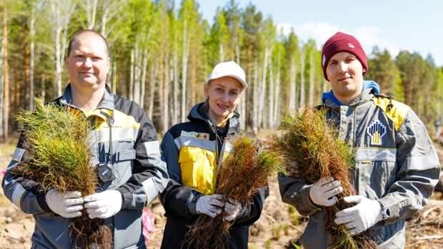 «Роснефть» озеленяет территории своего присутствия