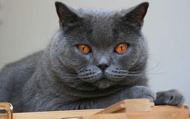 У подруги в доме пахнет кошкой, а у меня нет. Сравнила условия содержания питомцев и поняла, в чем причина.