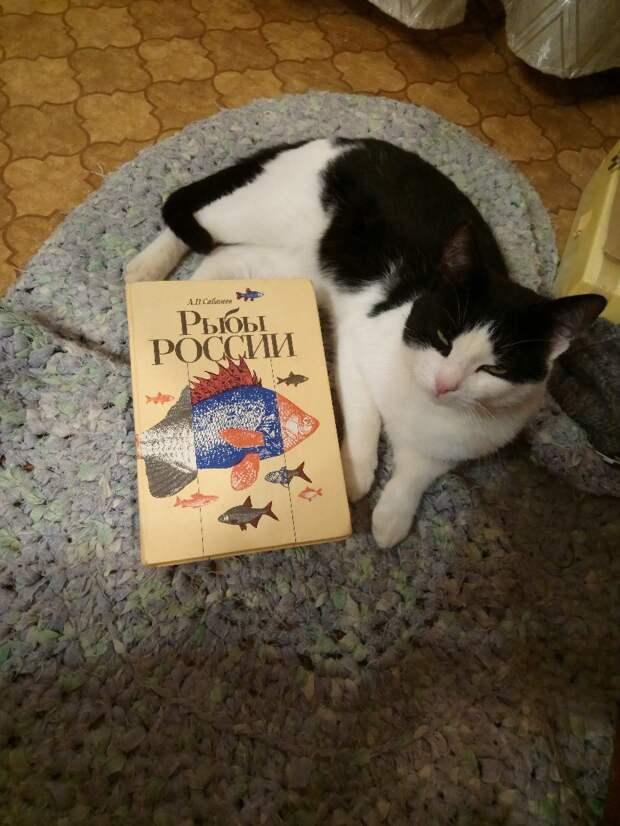 кошка с книгой