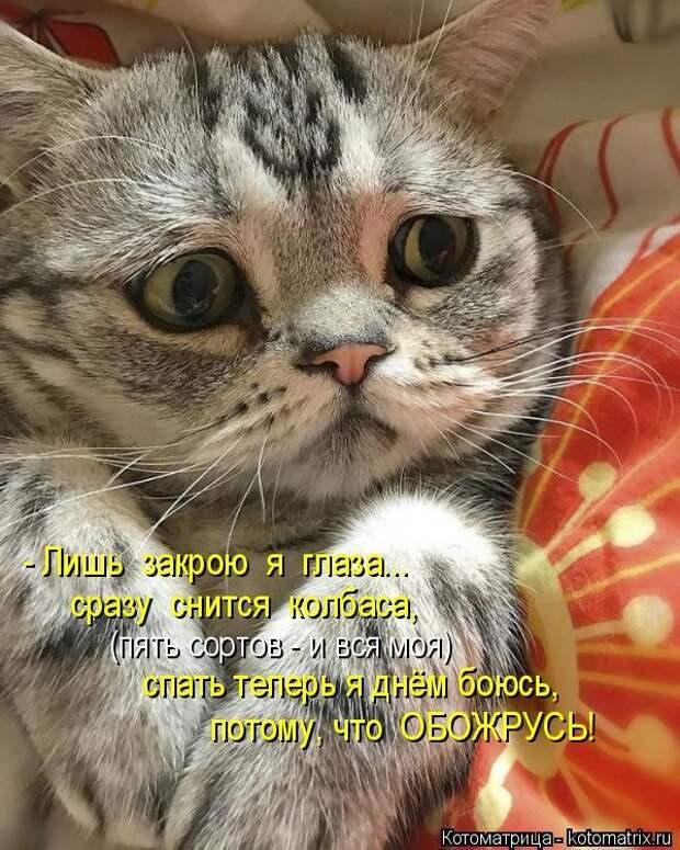 Самые свежие котоматрицы