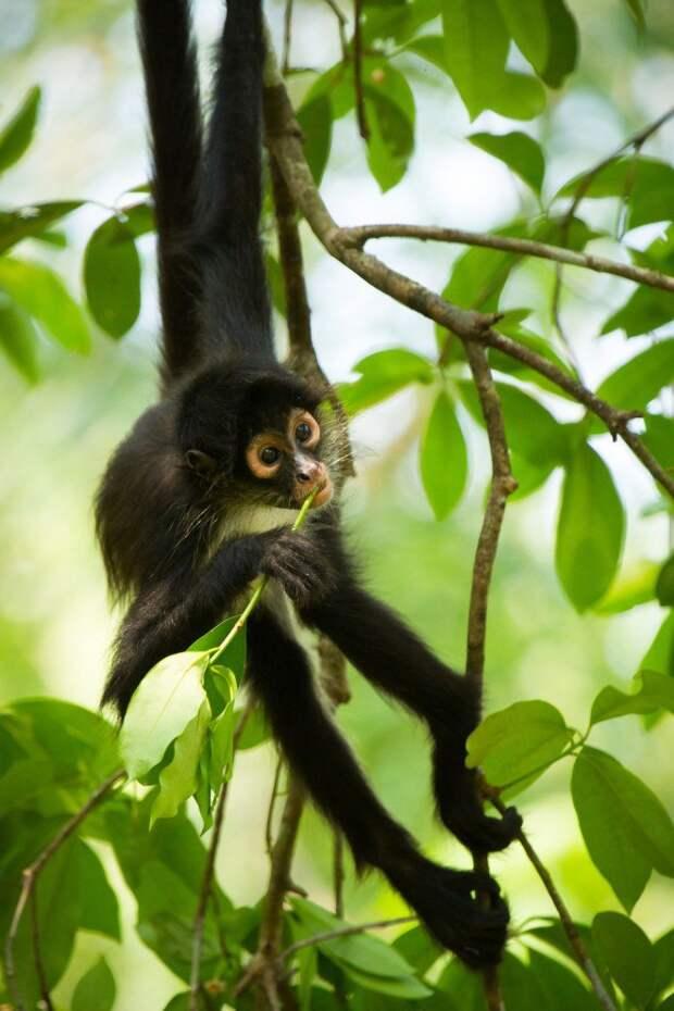 Забавные животные и красота природы (11 фото)