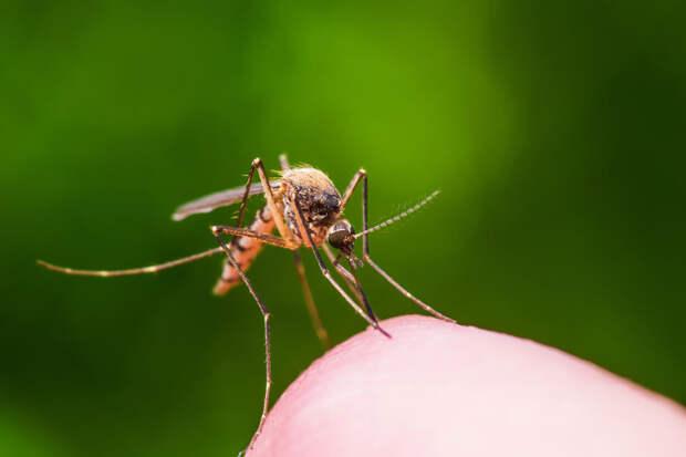 Ученые рассказали об опасности появления нового вируса в Великобритании