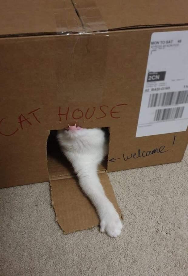 Клоуны, а не коты