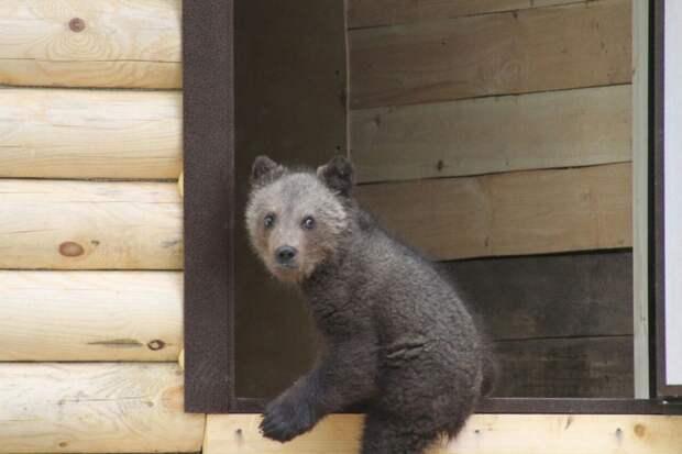 Многодетная мать из Тувы преодолела 4000 км ради спасения медвежонка