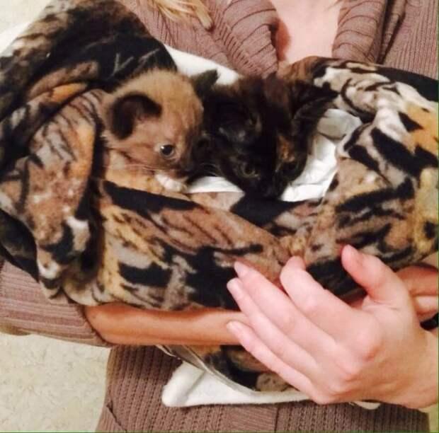 Пес Ватсон спас заживо похороненных котят