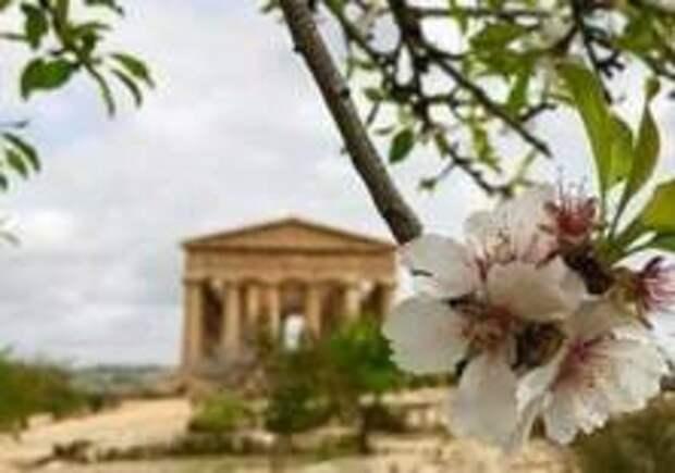 На Сицилии зацвели миндальные деревья