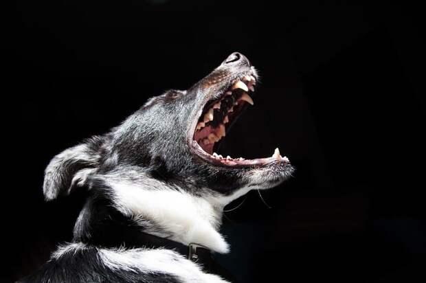 На Лонгиновской улице обосновалась стая бродячих псов