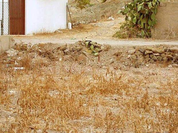 Мастера маскировки: найди кота!