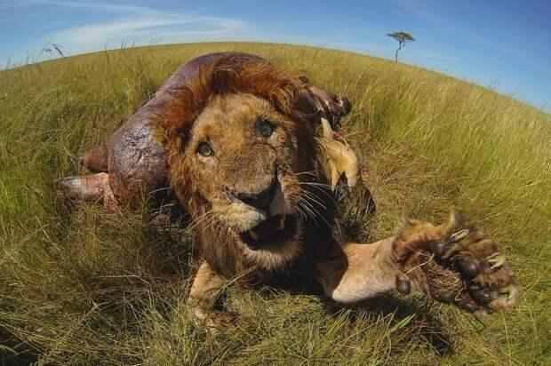 zivotnye za mai 2014 1 ned 8 Лучшие фотографии животных со всего мира за неделю