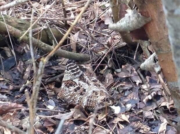 Охотник ранил редкую птицу в лесу Тверской области