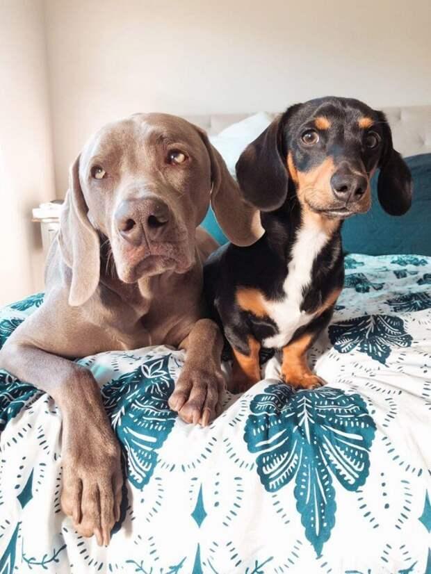 Крутая история дружбы двух собак!