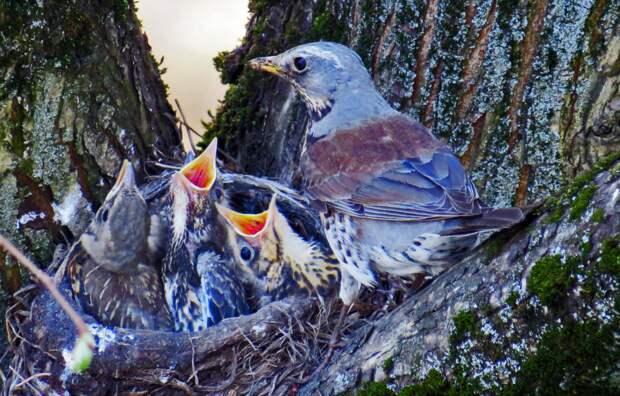 Прожорливые птенцы из Северного Тушина стали героями социальной сети