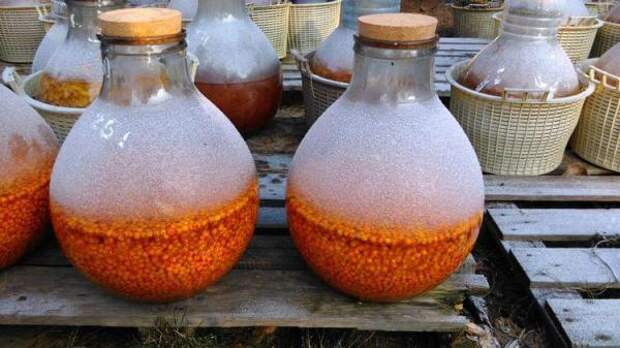 «Осеннее золото» – полезные и вкусные облепиховые настойки