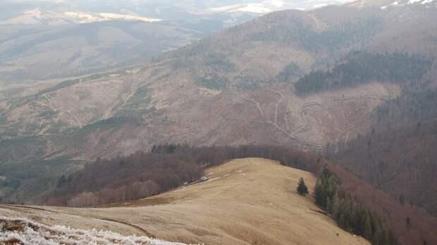 Несмотря на мораторий, лес-кругляк вывозят из Украины на запад эшелонами