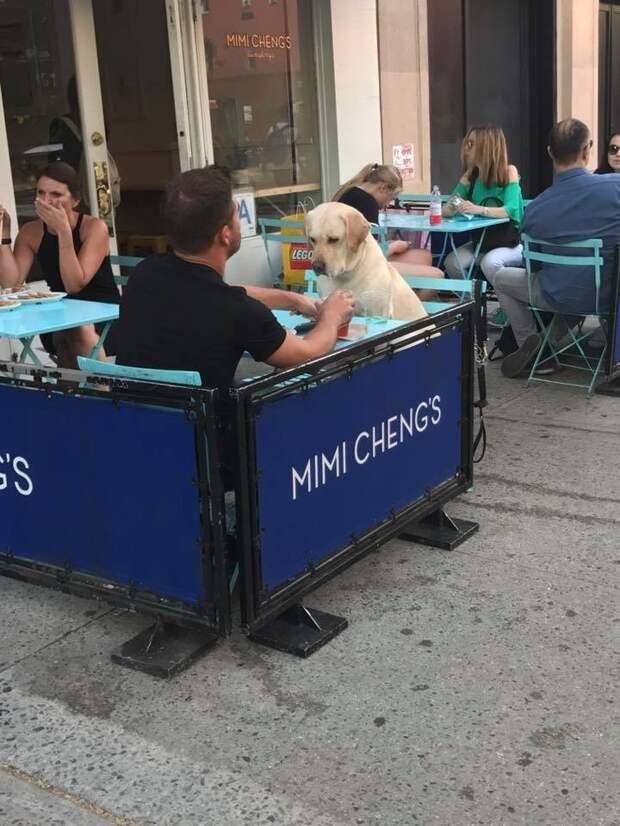 Обед в кафе животные, жизнь, мир, роскошь, собака, удобство, фото