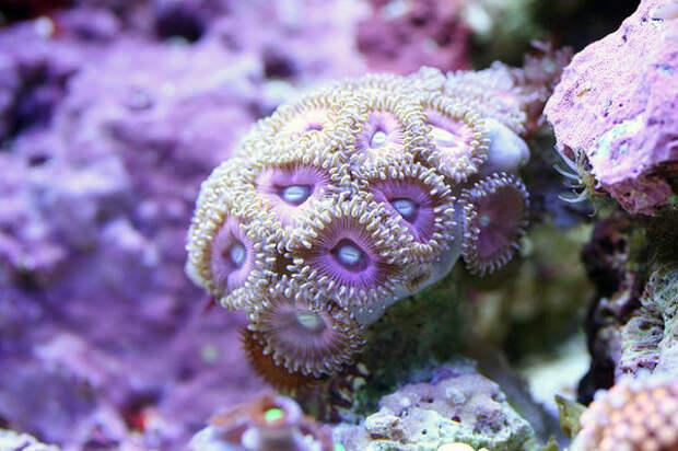 Удивительная макросъёмка подводных кораллов и не только...