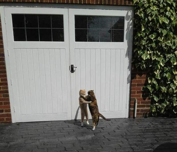 Как кошка с кошкой…