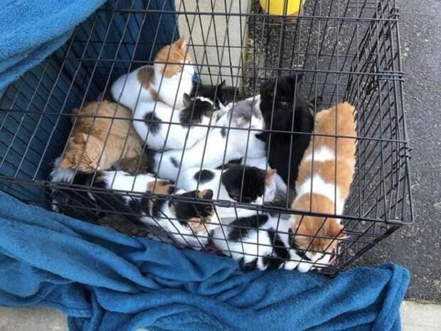 Коты в клетке