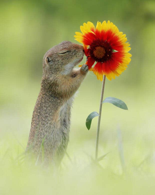 Гадание на цветке.