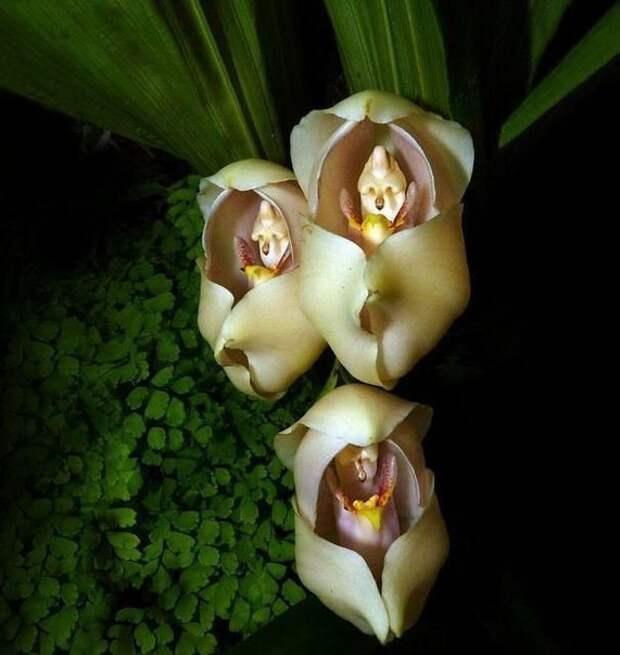 Цветы, которые выглядят как нечто иное