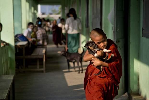 Буддистский монах со щенком в школе на окраине Янгона, Мьянма, 18 февраля 2016 года.