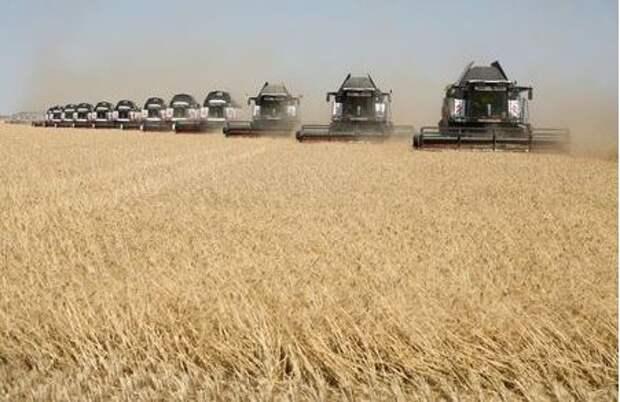 Combines harvest wheat in a field outside the settlement of Terskiy in Stavropol region, Russia July 7, 2020. REUTERS/Eduard Korniyenko