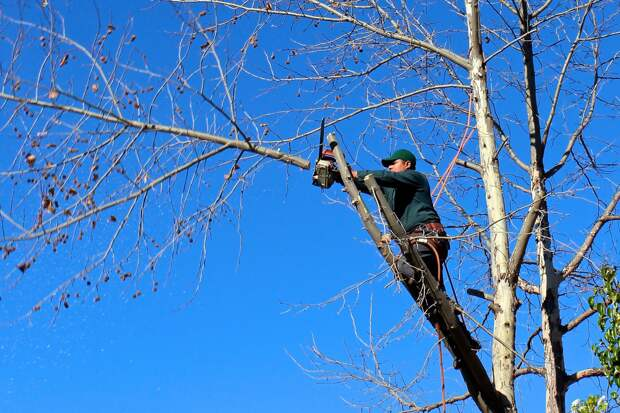 В Симферополе на 3 дня перекроют одну улицу из-за обрезки деревьев
