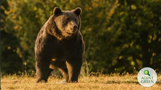 Принца Лихтенштейна заподозрили в трофейном убийстве самого большого медведя Европы