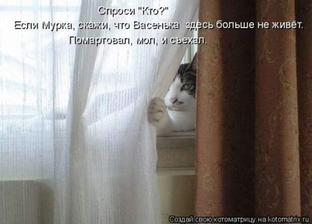 1402585969_kotomatricy-20