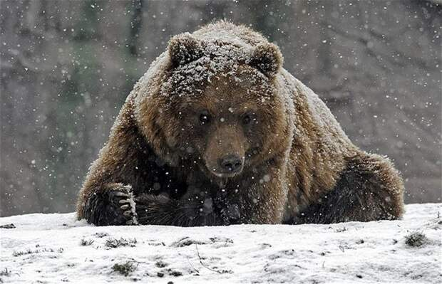 40 очаровательных животных в снегу животные, зима, милота, позитив, снег