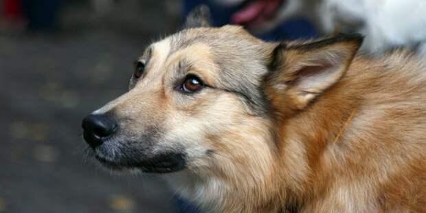Жительница с Онежской регулярно шлет проклятия владельцам собак