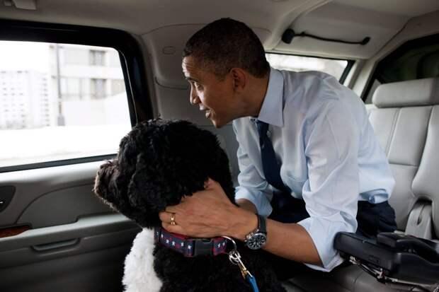Обама с «первой собакой Соединённых Штатов Америки» по кличке Бо.