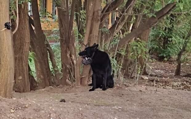 На улице Саляма Адиля оставили собаку, привязанную поводком к  дереву