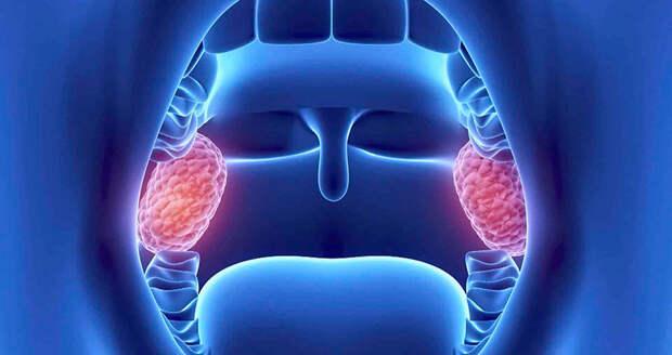 Миндалины: первопричина многих проблем со здоровьем