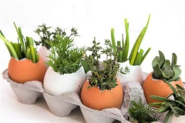 Выращиваем рассаду в лотках из-под яиц – полезные советы дачникам