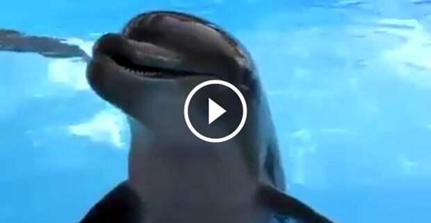 Вы когда-нибудь видели, как смеется дельфин?