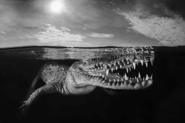 30 лучших работ отпобедителей конкурса подводной фотографии Through Your Lens 2020