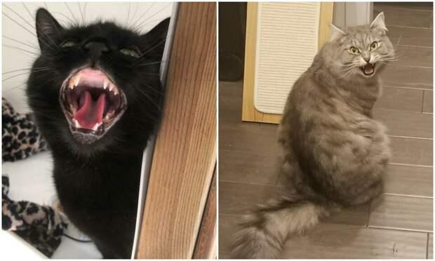 30 фото с котейками, при взгляде на которые слышен громкий «Мяу»