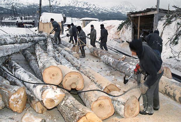Сортировка древесины в зоне строгого режима