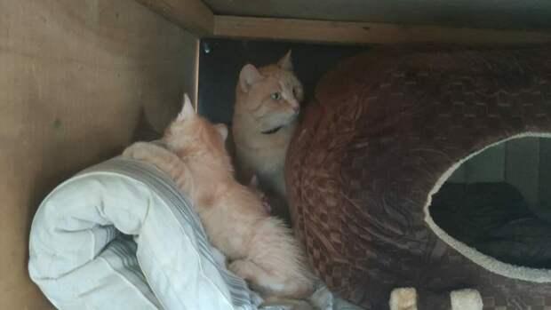 Кошка жила в подъезде несколько лет