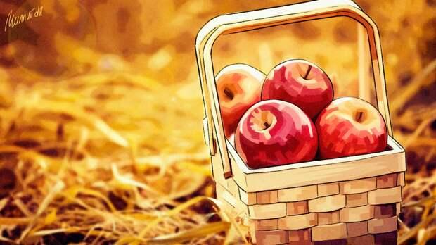 Эксперт Yahoo News Japan рассказал, как приготовить домашний уксус из сезонных яблок