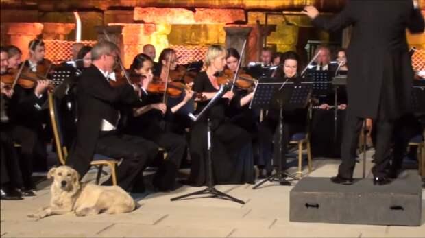 Пёс сорвал овации во время выступления Венского симфонического оркестра в Эфесе