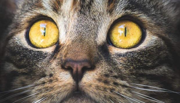 Кота в Петрозаводске спасли с помощью пожарной лестницы