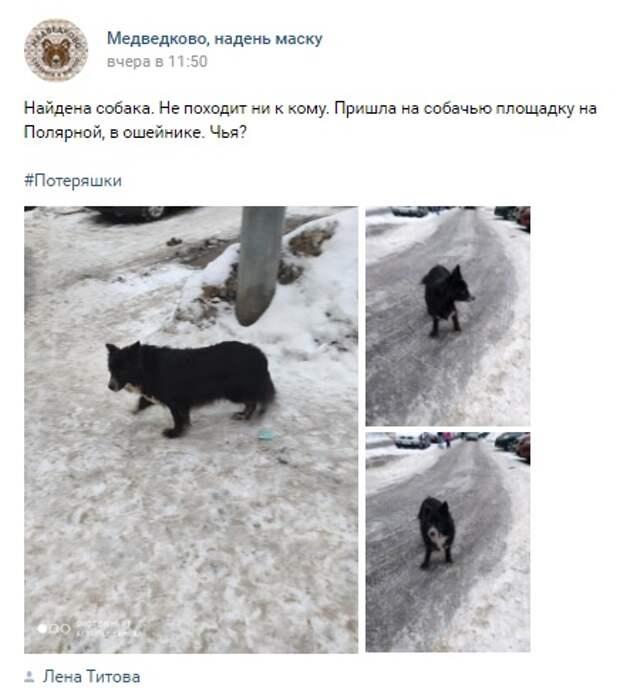 На Полярной ищут хозяина сбежавшей собаки