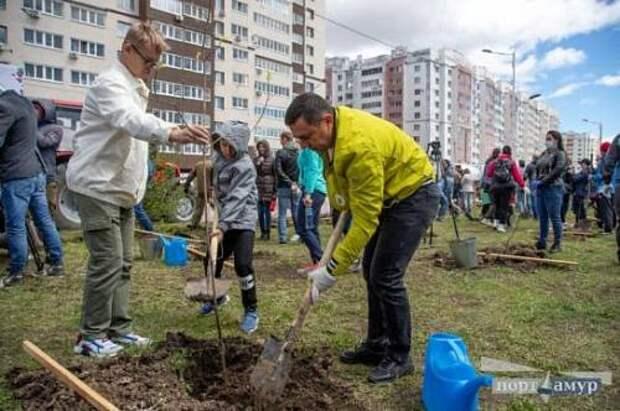 В честь погибших героев войны в Благовещенске будут расти 350 новых деревьев