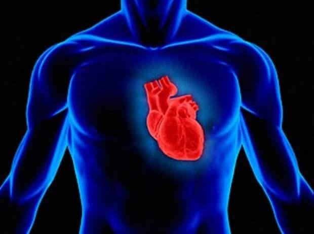 17. Наши сердца сильнее, чем любая другая мышца в нашем теле  тело, человек, шокирующие факты