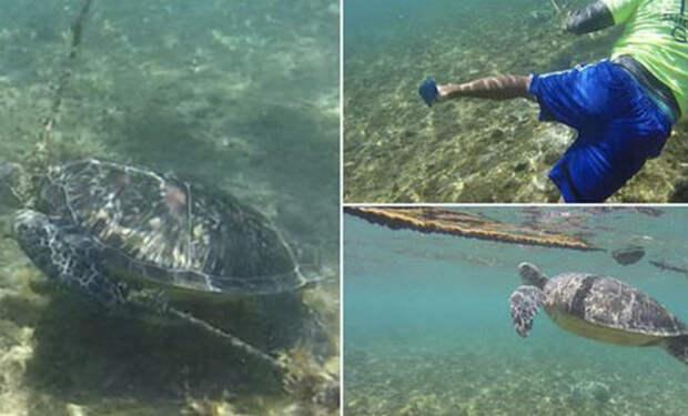 Черепаха застряла на дне и уже отчаялась спастись, когда на помощь пришел дайвер