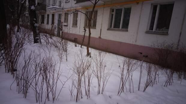 Кусты во дворе на Ташкенской были высажены по просьбе жителей — управа