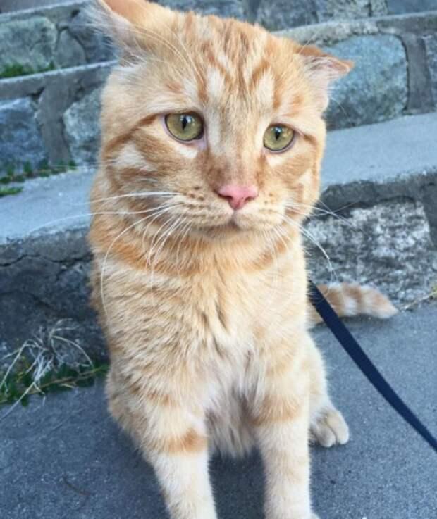Что с котами делает любовь: самый грустный БенБен в мире смог ходить после усыновления